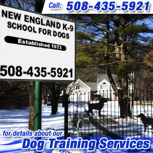 Dog Trainer Hopkinton, MA